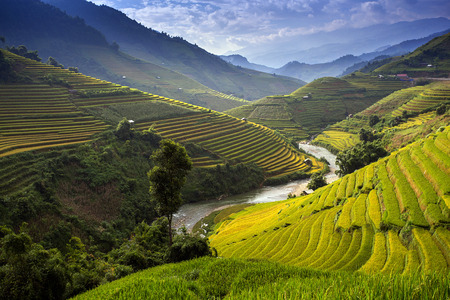 southeast asia: Rice farm in Vietnam