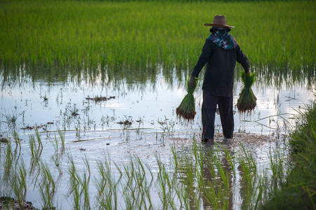 worked: The Asian farmer worked on the farm for his family�s food and products.
