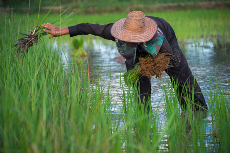 The Asian farmer worked on the farm for his family's food and products. Stock Photo