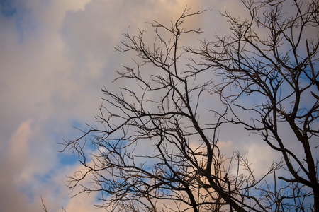 dramatic sky: The dramatic of branches and the sky