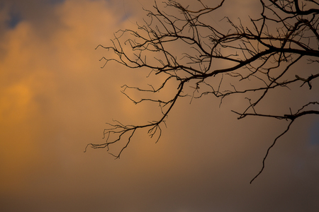 dramatic: The dramatic of branches and the sky