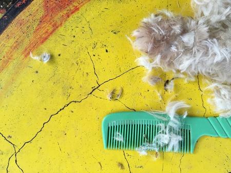 eye: The dog and the hair cut equipment.