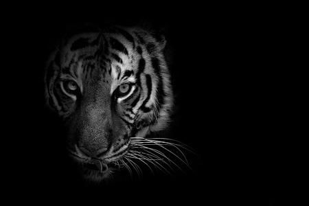 Zwart-wit wild dier met low key achtergrond