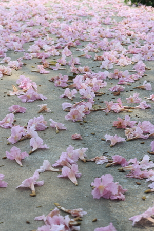 onto: Pink flowers dropped onto the ground. Flower Ground Covers. Stock Photo