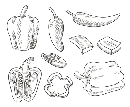 sketch Chili peppers vector design 일러스트