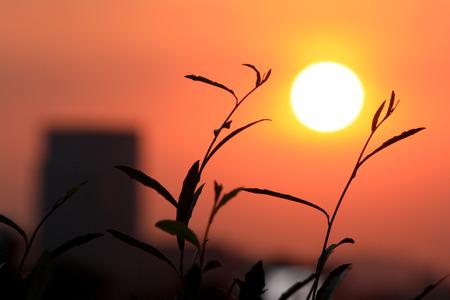 orange sunset: Orange light of the sun sets through the grass Stock Photo