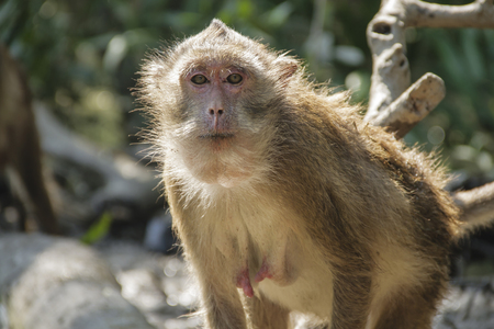 face shot: Monkey staring at you Stock Photo
