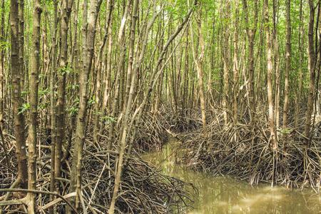 rayong: Mangrove forest at Rayong, Thailand Stock Photo
