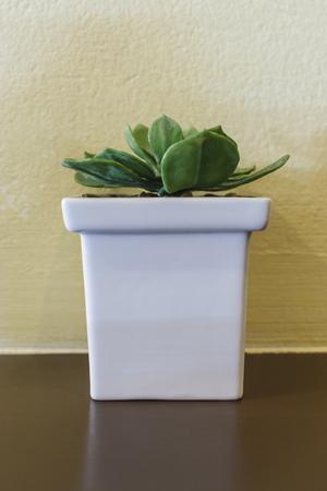 flowerpots: Cactus in flowerpots on wood floor with yellow wall
