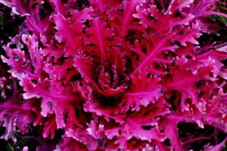 red pink: Natural streak, red pink purple