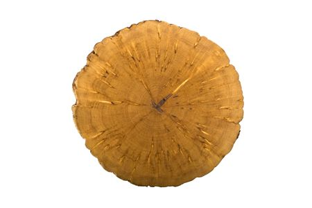 Rare tree breed: karelian birch