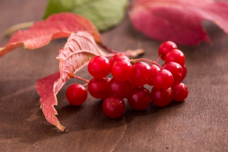 guelder: Red guelder berries on a wooden surface
