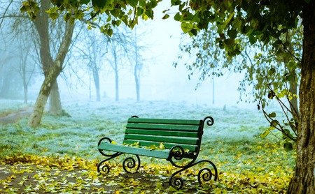 Bench in foggy park