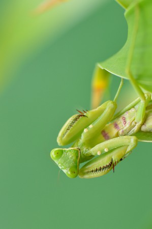 patchy: grasshopper Stock Photo