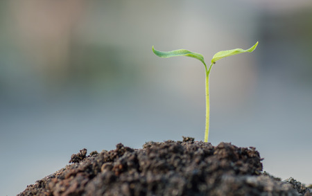 実生植物の成長 写真素材