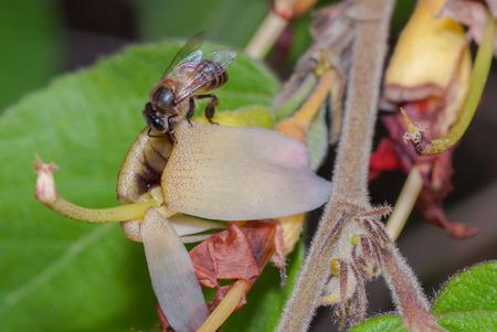 bee swarm: Flower bee swarm