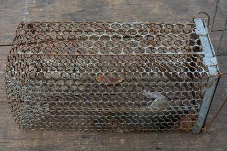 trap: Rat trap