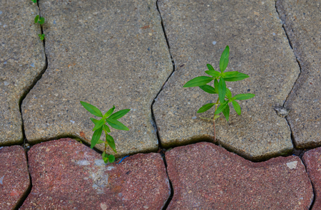 Seedlings grow through cracks in the pavement