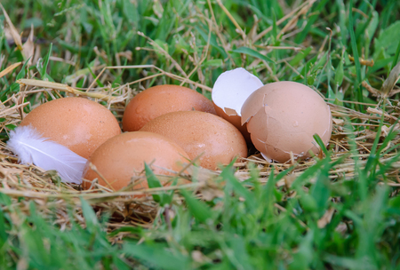 The eggs are hatched Stock Photo