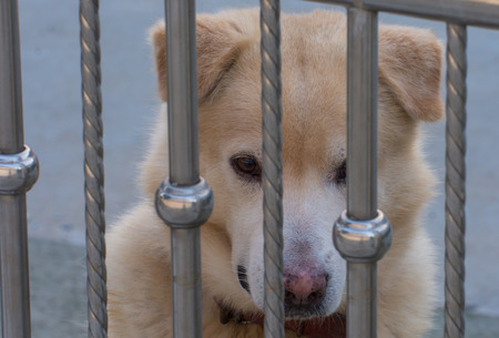confined: Dogs that are confined