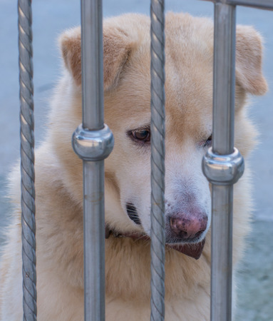 Dogs that are confined