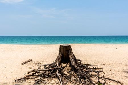 backgruond: broken tree on sand