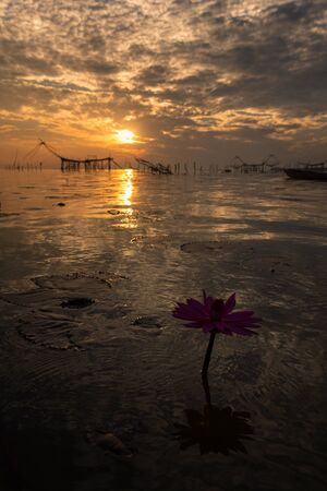 Beautiful lotus flower on Pak Pra Canal of background at Phatthalung Province , Thailand.