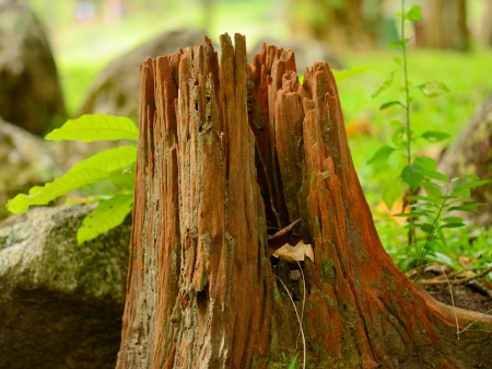 Stump Stock Photo - 16174333