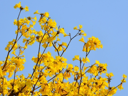 Indian yellow flowers. Stock Photo