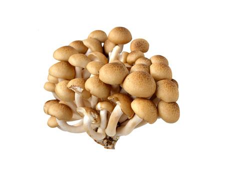 enhances: Beach Brown Mushroom on a white