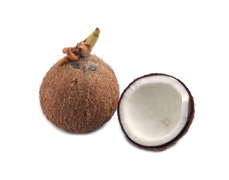 Coconutsl with white background Stock Photo