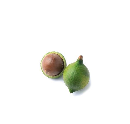 Macadamia with white background