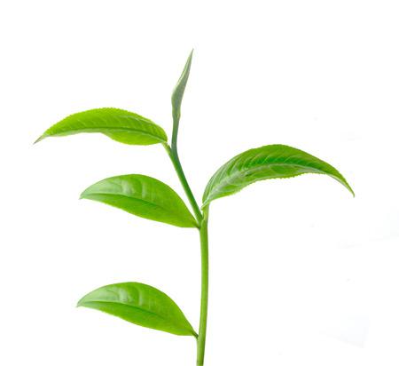El t� de hojas de fondo blanco
