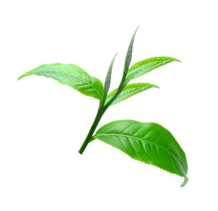 Tea leaves with white background