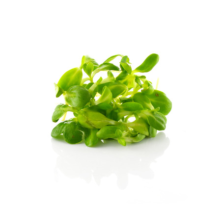 high priced: Germinated sunflower seedlings Stock Photo