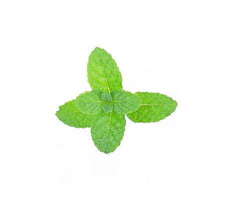 spearmint: fresh mint leaves on white background