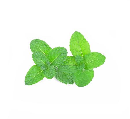 hojas de menta fresca sobre un fondo blanco