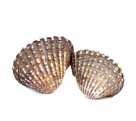 scallops: Scallops on a white background