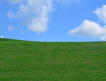 herbe ciel: ciel fond d'herbe