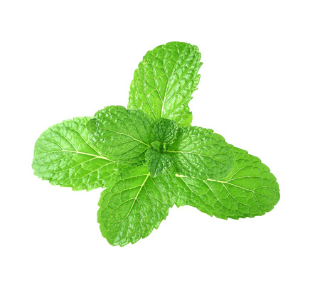 mint leaves: Mint leaves isolsted white background