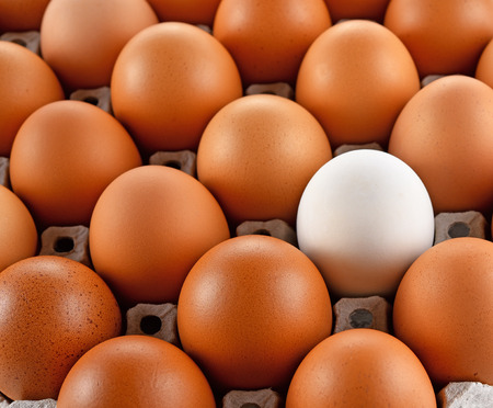egg laying: Closeup of white egg laying block pape