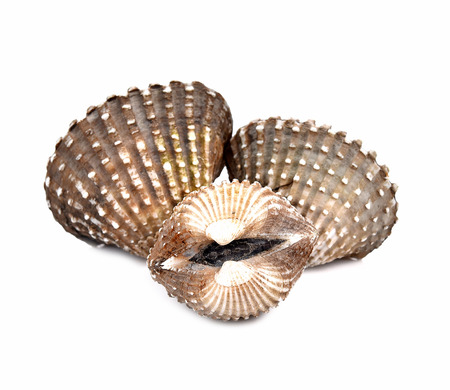 Scallops shell  on a white background