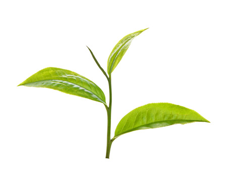 Tea leaves siolated on white background Stock Photo