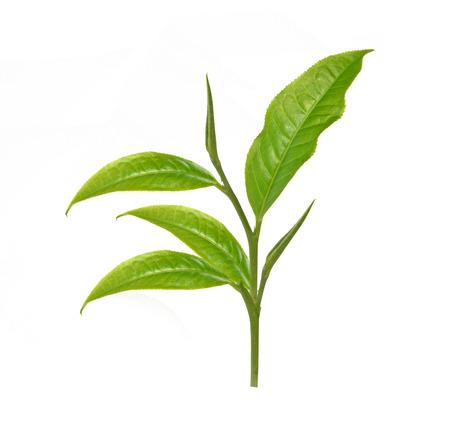 Groen blad thee, gedroogde theebladeren in houten kommen, geïsoleerd op een witte achtergrond