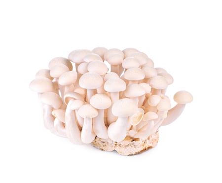 hon: shimeji mushrooms white isolated on whith background