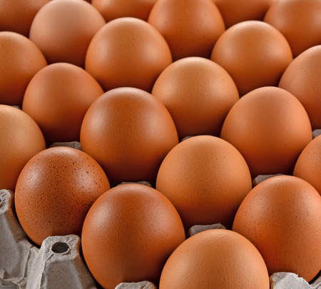 egg laying: Eggs and egg laying block paper