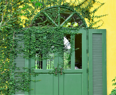 velcro: Coatbuttons walls covered with Velcro green leaves edged with green window
