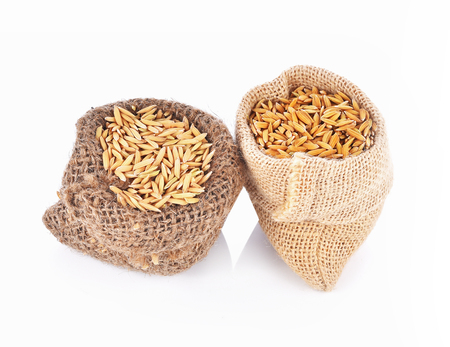 cash crop: Paddy rice seeds in bag on white background