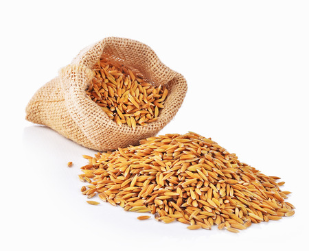 cash crop: Paddy bag on white background Stock Photo