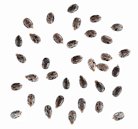 Castor seed isolated on white background Stock Photo